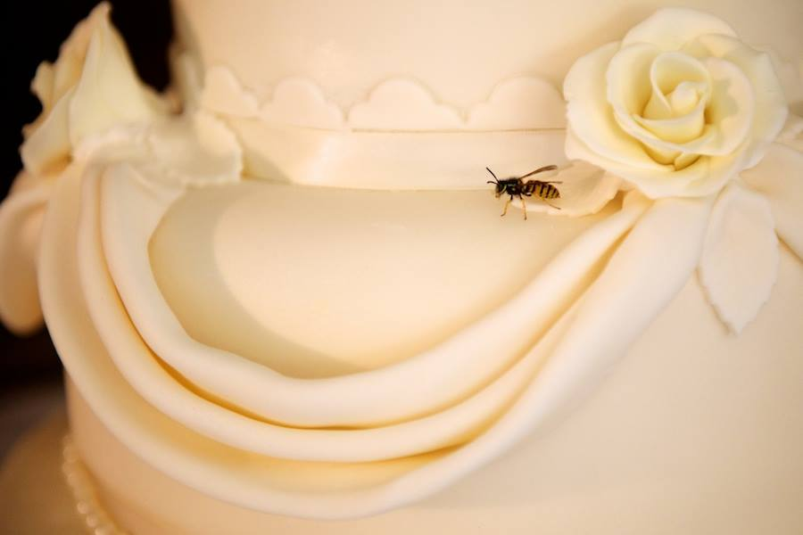 cake-insect-4.jpg
