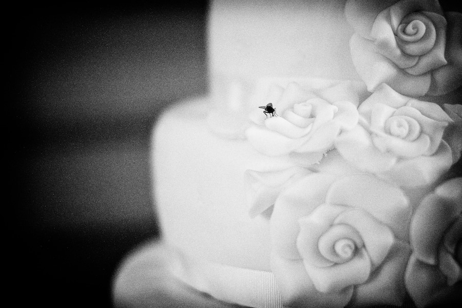 cake-insect-1.jpg
